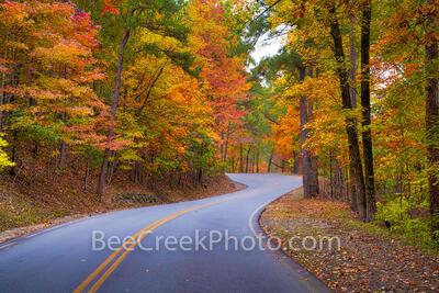 Fall Curvy Road Landscape