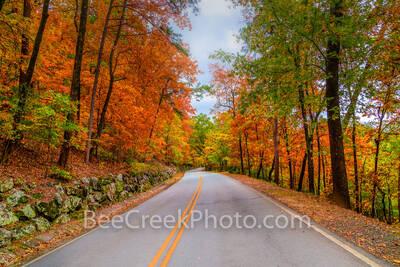 Fall Roadside Colors