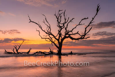 Driftwood beach, driftwood, jekyll island, beach, fiery, red, orange, pink, dawn, sunrise, silouette, deadwood, tree, tide, surf, firey, color, tide rolled in, barrier island, alantic coast, georgia,