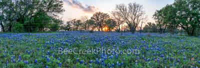 bluebonnets, bluebonnet wildflowers, texas hill country bluebonnets, texas hill country wildflowers, texas, bluebonnet landscape, texas bluebonnets, texas wildflowers, pictures of bluebonnets, photos