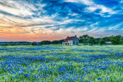 Hill Country Farmhouse with Bluebonnets