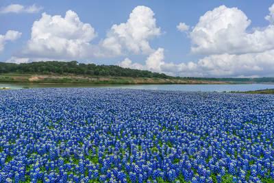 Incredible Bluebonnet Landscape