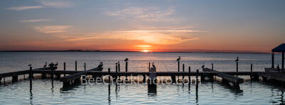 Pelican Sunset Pano, pelicans, seagulls, docks, sunset, Laguna Madre, coastal, seascape, scenic, blue heron, birds, pano, panorama. south padre, island, texas,