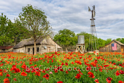Poppies at the Farm