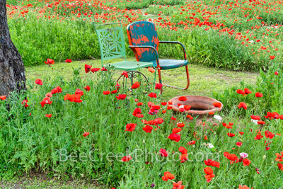 Relaxing in the Poppies