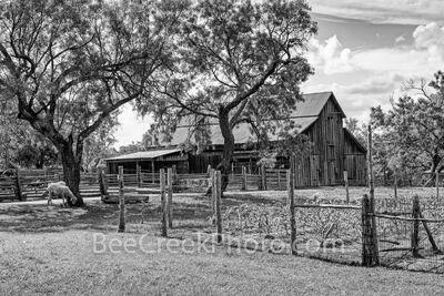 Rural Texas Hill Country Farm BW