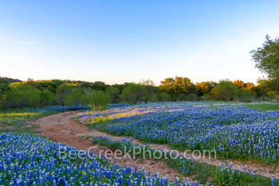 bluebonnets, indian paintbrush, wildflowers, texas hill country, texas, blue bonnets,hill country, shadows, light, road, mesquite, green, blue, llano, sun, shadows, light, trees, curved road, images o