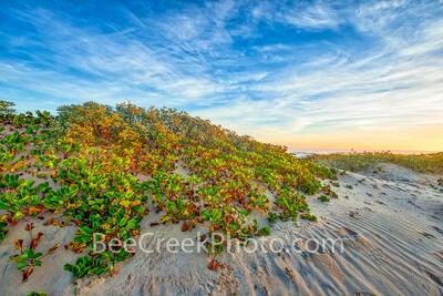 South Padre Sand Dune