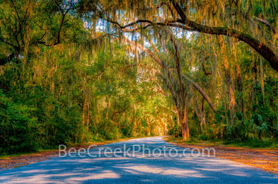 Georgia Golden Isles, barrier islands, spanish moss, tunnel, trees, oak, jekyll island, green forest, east coast, jungle, tree cave, sunlite, southern oaks, moss, tree tunnel,