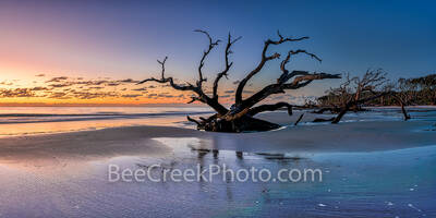 jekyll island, driftwood beach, boneyard beach, sunrise, colorful, sand, alantic ocean, deadwood, east coast, reflections, reflecting, colors, sky, Geogia, wet sand, pano, panorama, Golden Isles,