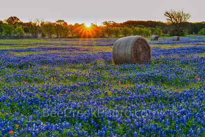 Texas bluebonnets, hay bales, indian paintbrush, rural texas, field of haybales, wildflowers, farm, sunrise, Texas hill country, Sunrise Over Bluebonnets, wildflower landscape,