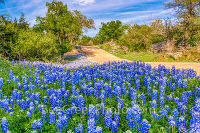 texas bluebonnets, bluebonnet, bluebonnets, texas bluebonnet, wildflowers, texas hill country, hill country, county road, backroad, images of texas, images of texas, texas wildflowers, bluefonnet road