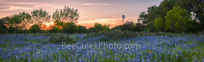 bluebonnet, sunset, cactus, prickly pear, windmill, texas, sky, texas hill country, landscape, iconic, texas scenery, hill country, wildflowers, texas bluebonnets, texas wildflowers, bluebonnet scener