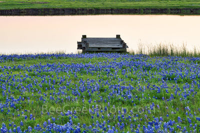 Texas bluebonnets, pond, water edge, pond, rancher, farm, rural texas, pier, ranch, dusk, wildflowers, bluebonnets, , gulf cost images, Texas beaches