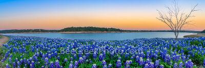 Texas Bluebonnets at the Lake Sunset Pano