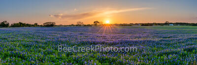 Texas Hill Country Bluebonnets Field Pano 2