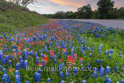 Texas Wildflowers Dusk