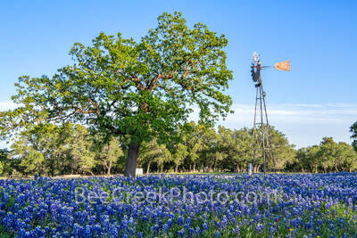 Texas Windmill and Bluebonnets 419