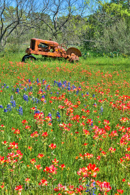 bluebonnets, indian paintbrush, wildflowers, tractor, landscapes, Hill country, images of texas, texas hill country, texas, vertical,