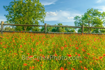 wildflowers, fence, texas hill country, field of texas wildflowers, hill country, indian blanket, fire wheel, yellow, spring, blue sky, clouds,