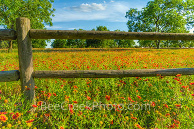 Wildflowers at the Fence