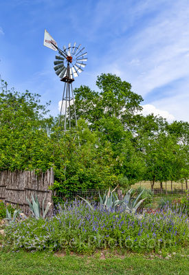 Windmill, tree, salvia, century plants, Texas Hill Country, wildflowers, cedar, bob wire, fence,