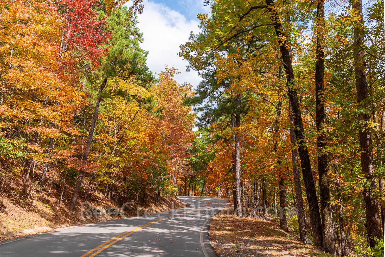 fall, autumn, drive, yellow, orange, pine, cypress, trees, shades, yellow, orange, rust, colors, fall colors, Tower Mountain, road, arkansas, national, forest, october, curves, sun light, tree line ro, photo