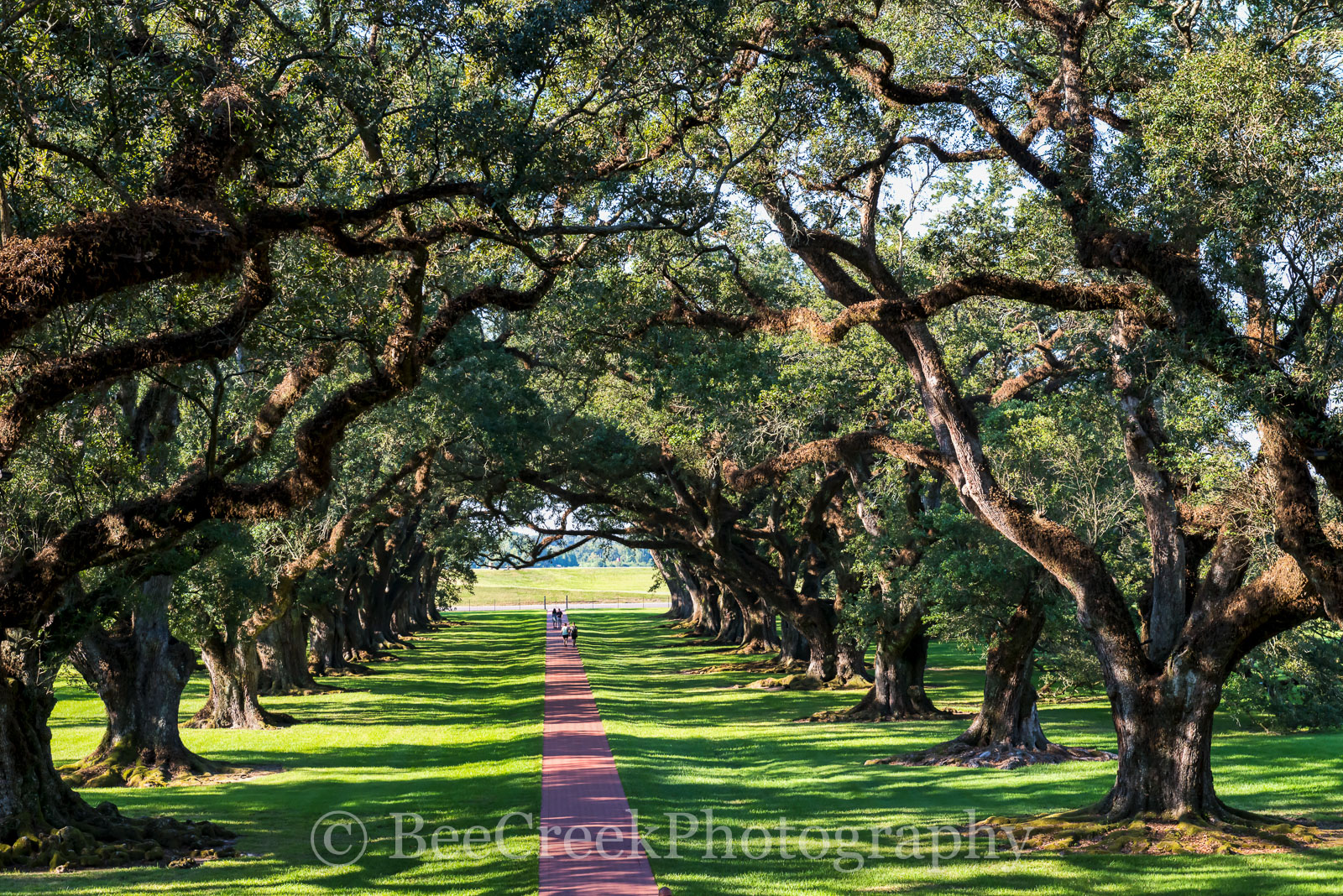 Lousiana, National Historic Landmark, Oak Alley, big house, branches, landscape, landscapes, mansion, mississippi, oak trees, people, plantation, sidewalk, slaves, sugar cane, sunset, photo
