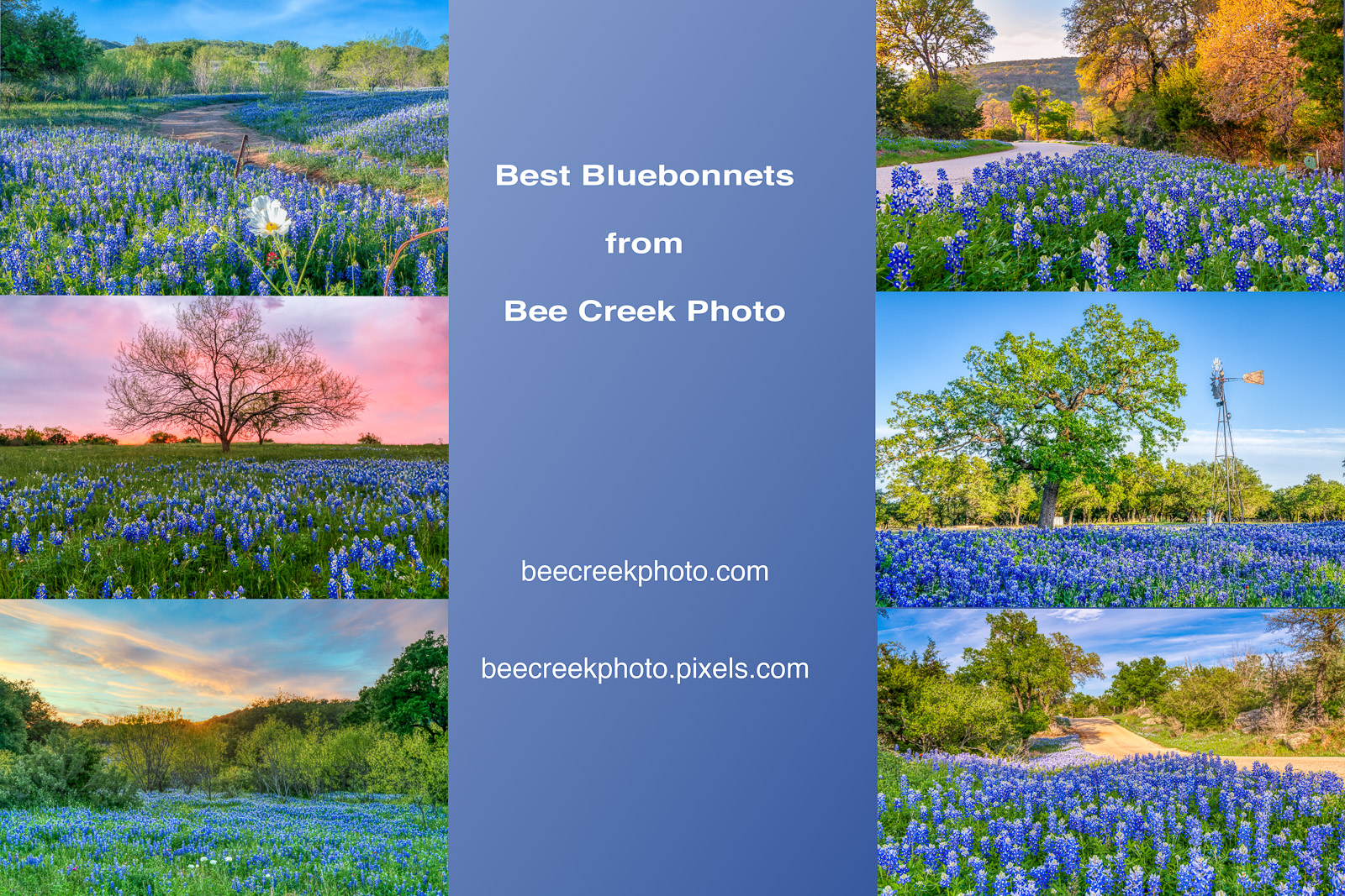 Here are just some of our bluebonnet photos to see more please go to our bluebonnets and wildflowers gallery