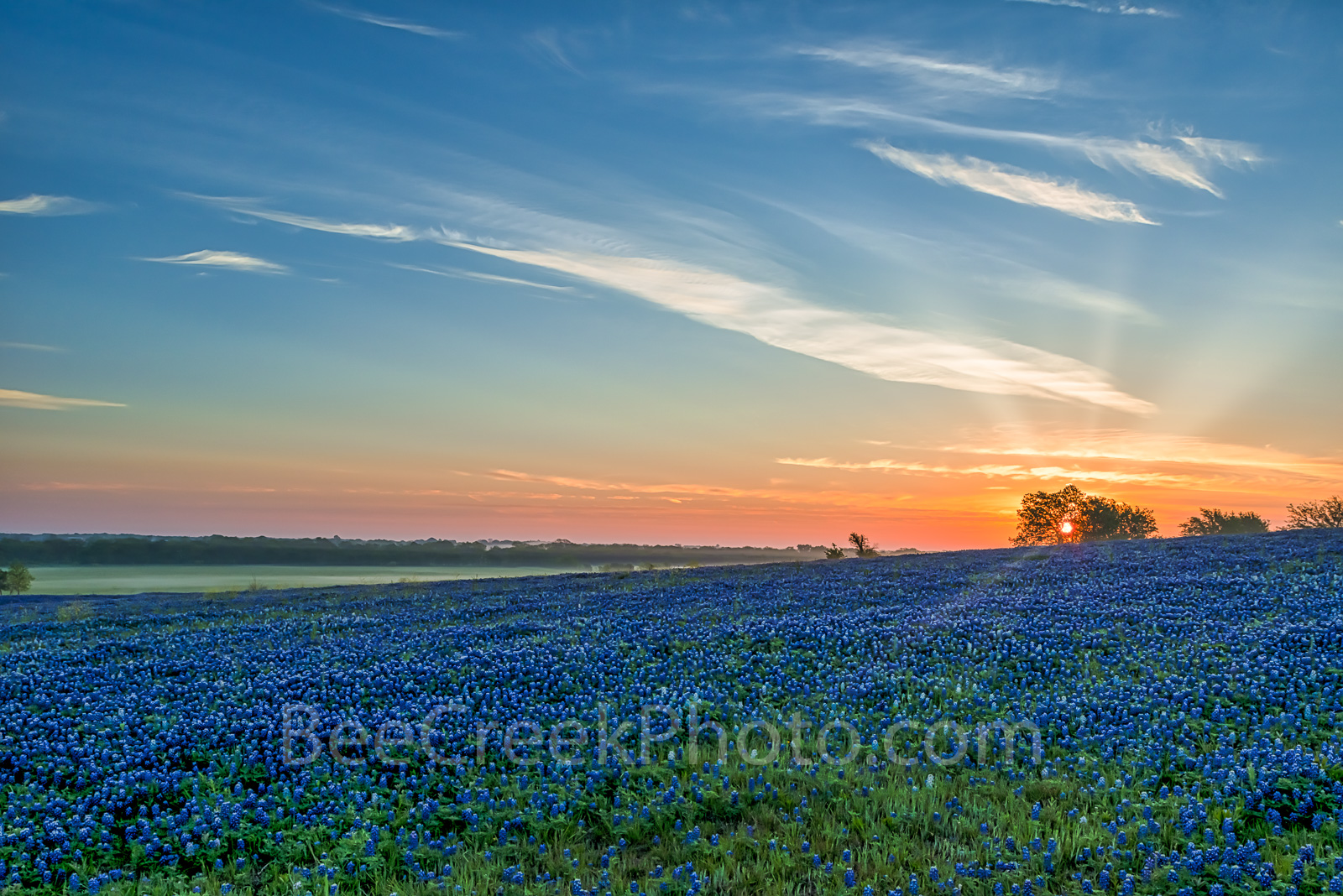 Bluebonnet pictures, bluebonnet images, Texas Bluebonnets, blue bonnet sunrise, image of bluebonnets, texas, bluebonnets, Ennis, sunset, texas landscape, pasture, fileld of bluebonnets, ranch, images , photo
