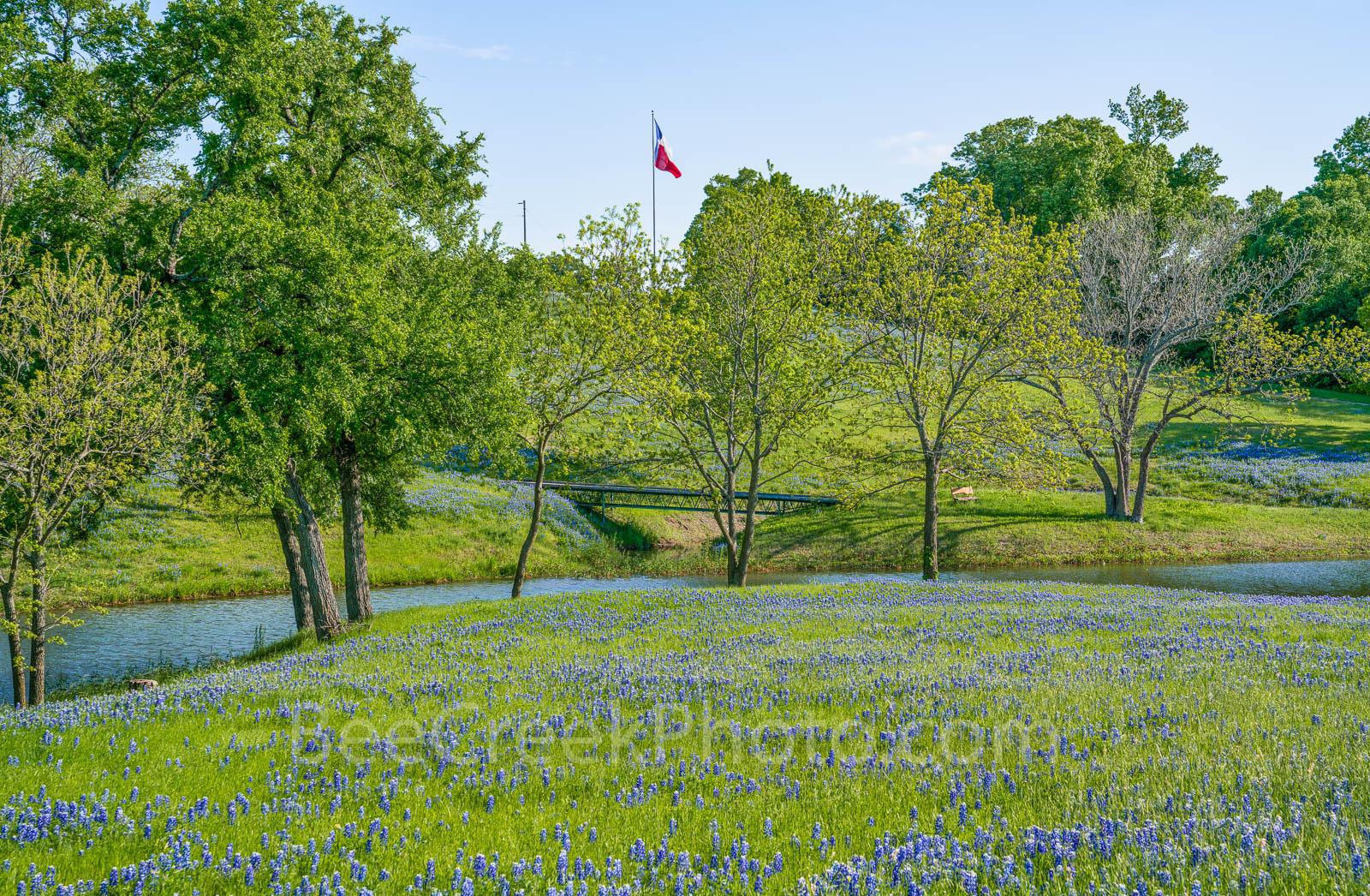 Ennis, Texas bluebonnet landscape, bluebonnets, landscape, texas, wildflowers, blue sky, creek, Texas flag,, photo