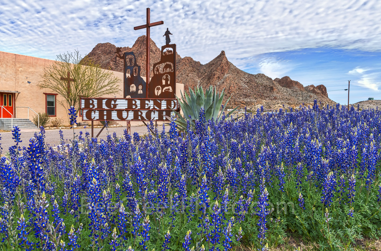 bluebonnets, big bend church, texas wildflowers, images of bluebonnets, texas bluebonnets, Big bend bluebonnets, Terlingua, Study Butte - Terlingua, west texas, usa,, photo