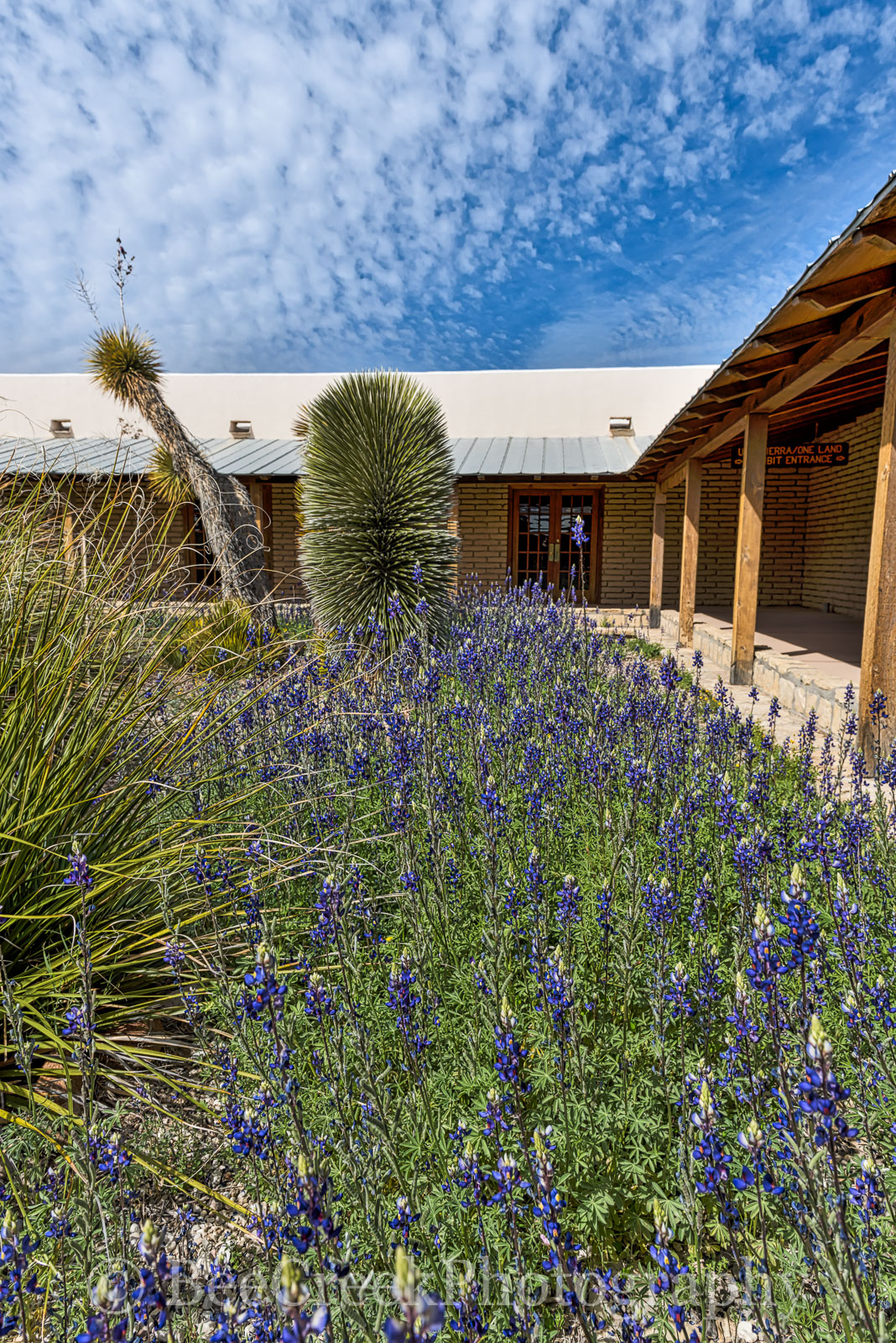 Big Bend State Park, bluebonnets, visitor center, texas, state flower, , photo