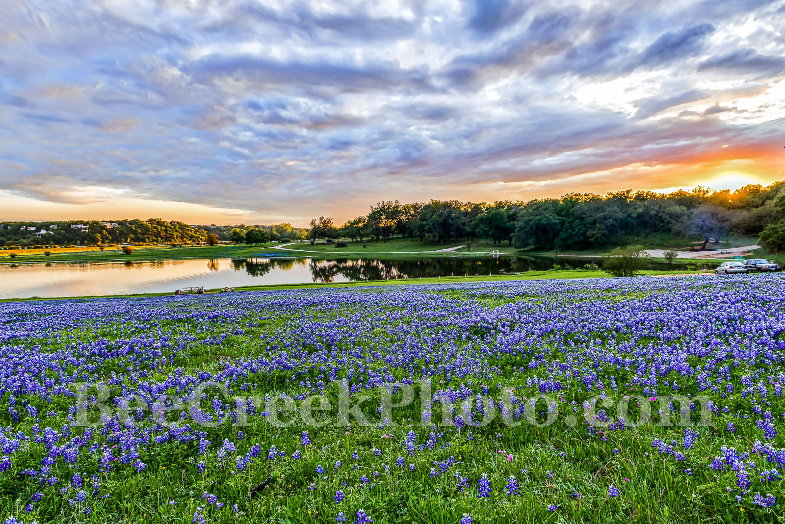Bluebonnets, bluebonnet, park, water, reflections, colors, oranges, pinks, reds, sky, colorful, blue bonnets, wildflowers, wildflower, Colorado River, landscapes, landscape, water, Texas flowers, Texa, photo