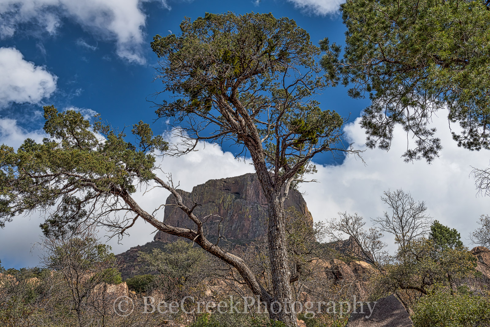 Big Bend National Park, Casa Grande, Mountains, landscape, peak, tree, up close, view, photo