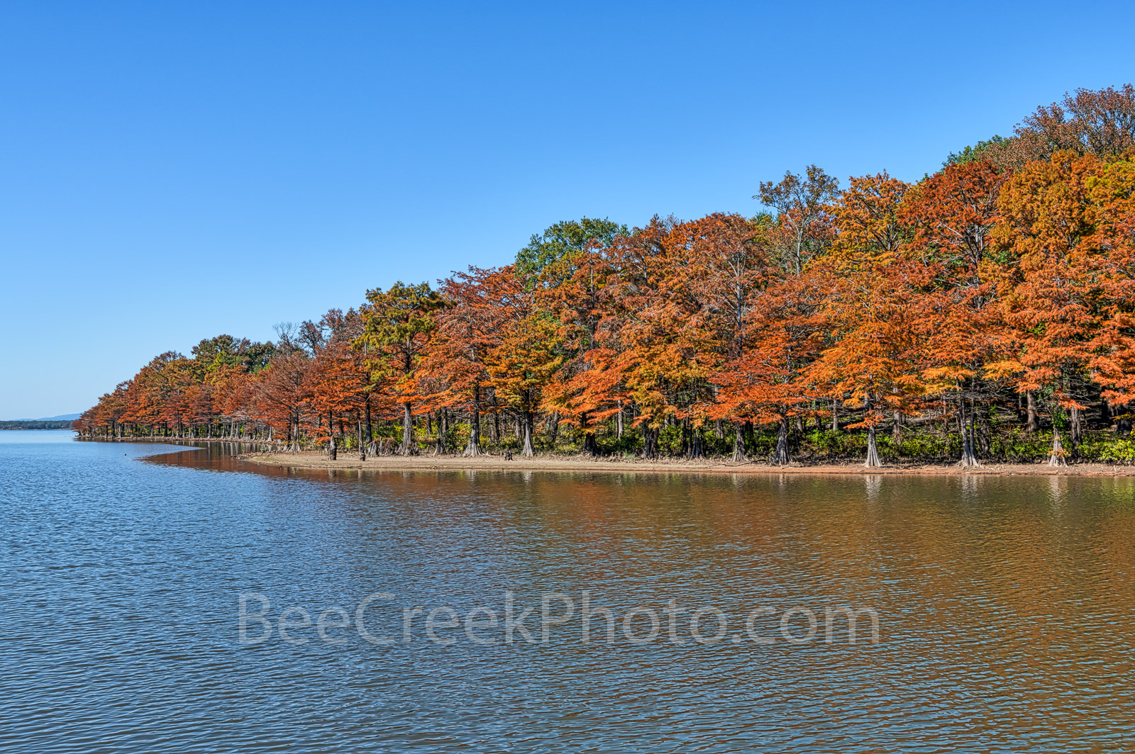 cypress, colorful, fall, fall colors, colorful, trees, autumn, rusty, orange, reds, banks, scene, scenery, wilderness, blue sky, forest, Lake Nimrod, arkansas, blue sky, cypress stumps, fall foliage, , photo