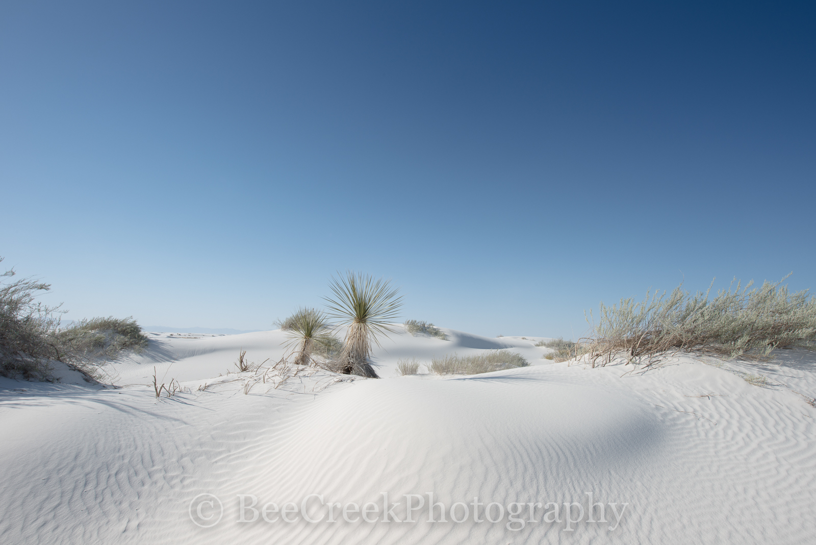 Alamagorda nm, New Mexico, New Mexico Parks, White Sand National Monument, Yucca in White sands, beautiful photos of white sands, dunes, flow of sand, gypsum, images of White Sands, magnificent white , photo