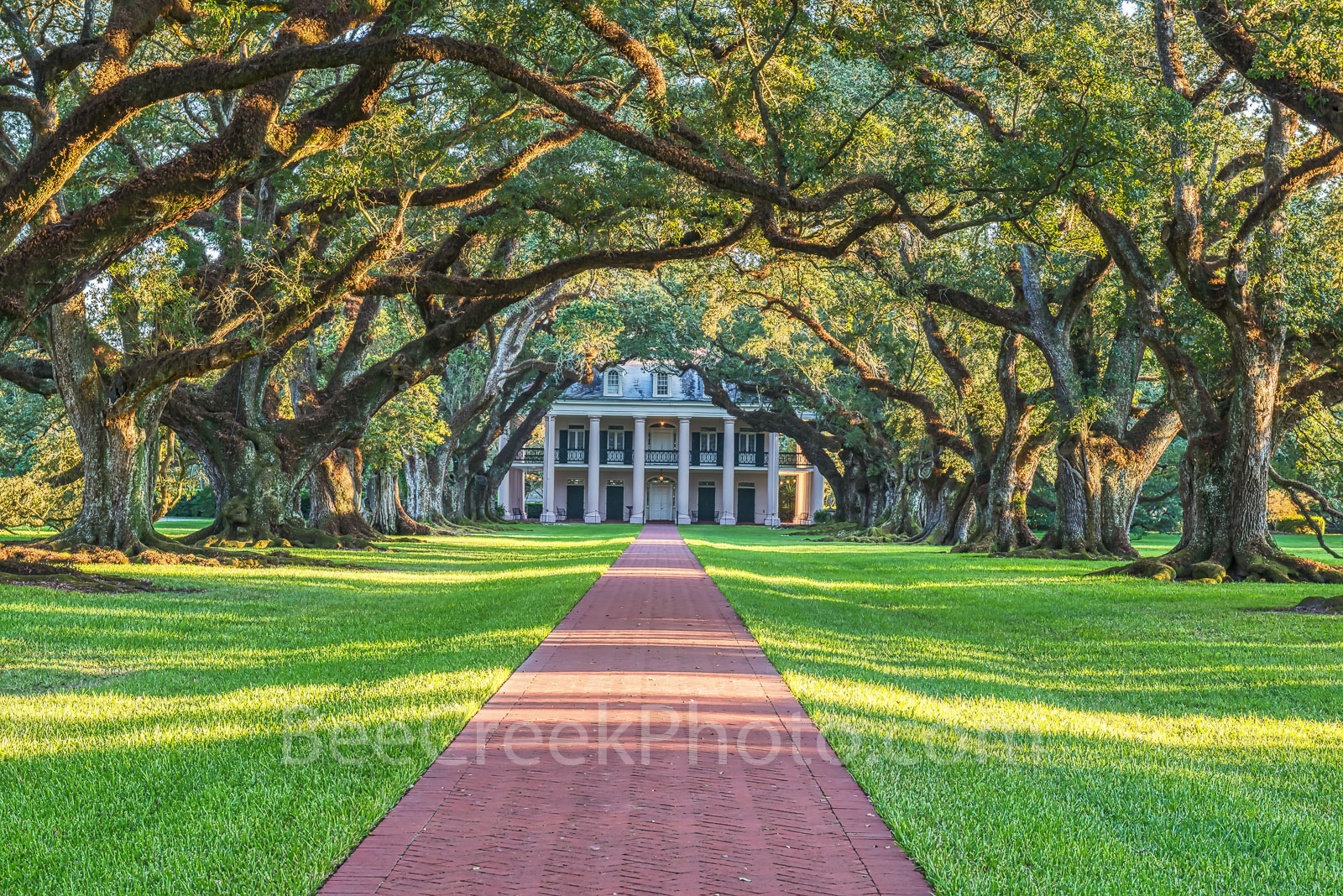 Lousiana, Oak Alley Plantation, sunrise, big house, branches, mansion, oak trees, plantation, roots, sidewalk, slaves, sugar cane, canopied path, seven oaks, oak valley, National Historic landmark, sl, photo