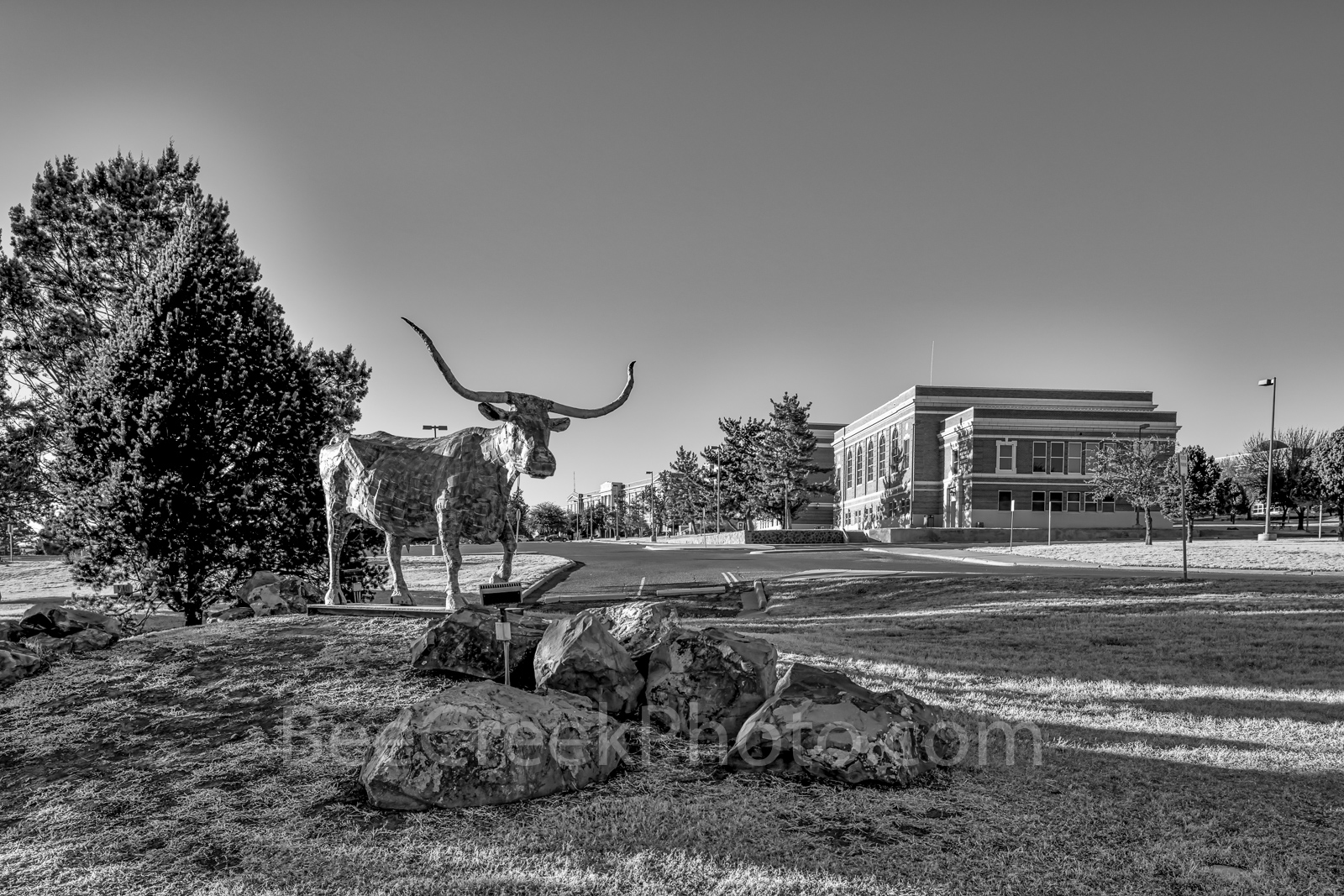 Sul Ross Bull, Alpine, rodeo history, Sul Ross State University, bronze, bull, statue, day, black and white, bw, west texas, , photo