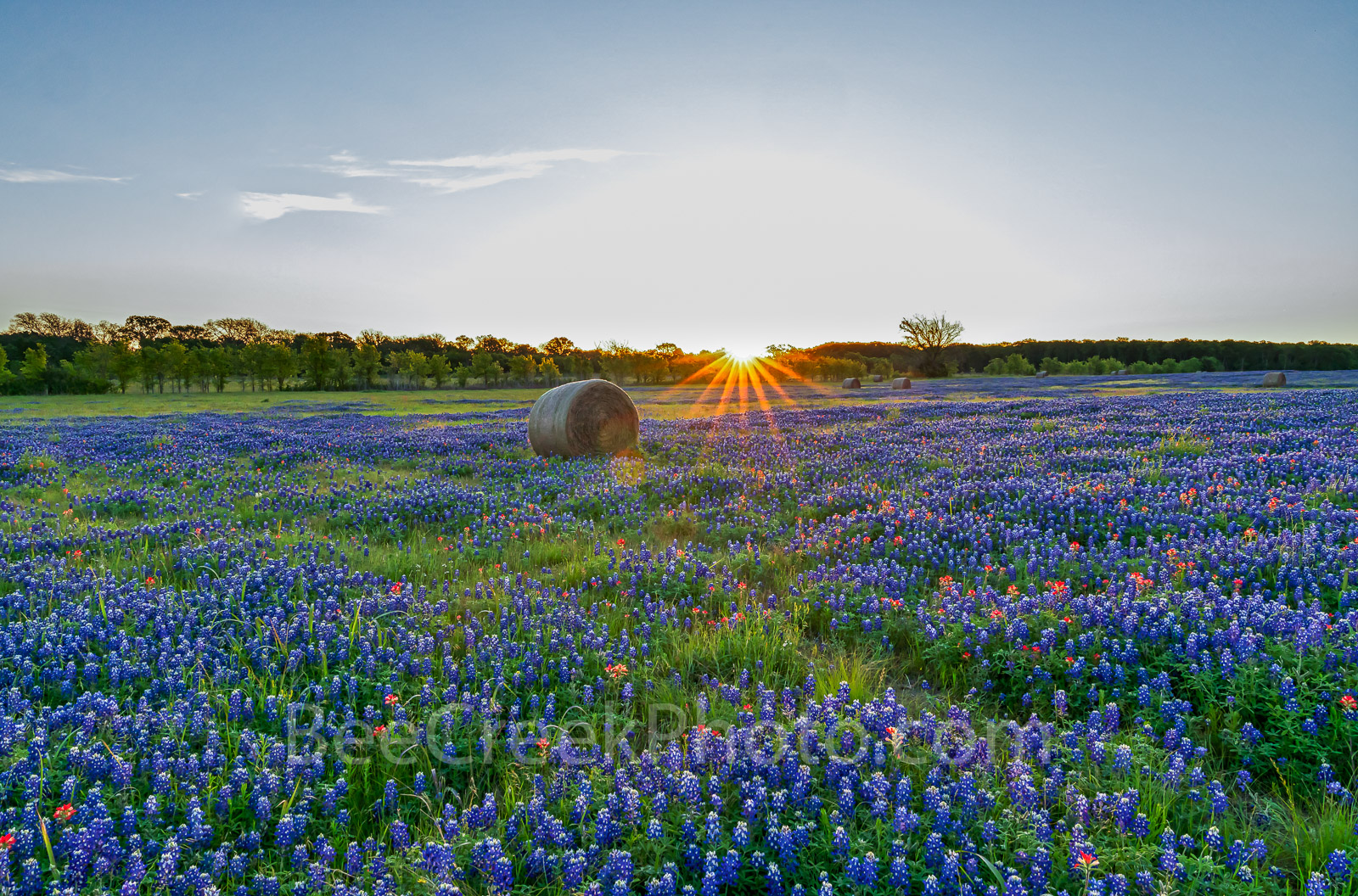 Texas bluebonnets, haybales, sunrise, texas bluebonnet wildflowers, farm, field, rays, sun, indian paintbrush, pop of red, light, rural texas, hay,