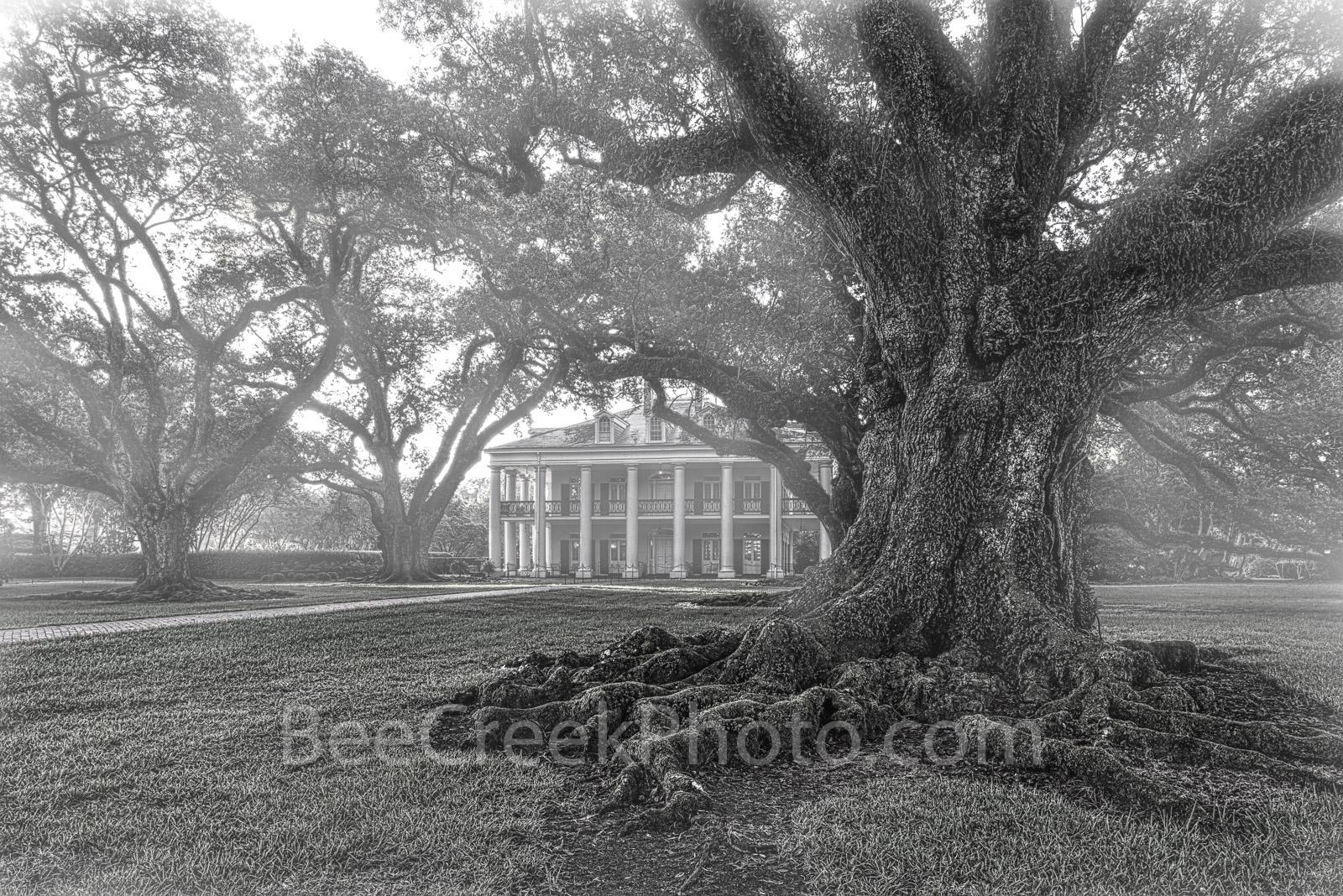 Oak Alley Plantation, black and white, bw, live oak trees, plantation oaks, slavery, deep south, southern, oak valley, seven oaks, mansion, big house, movies, Mississipp river, Vacherie, St James Pari