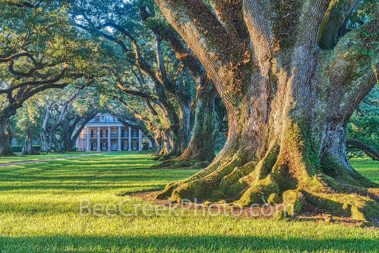 Lousiana, Oak Alley, Sunrise, big house, branches, mansion, oak trees, plantation, roots, sidewalk, slaves, sugar cane, photo