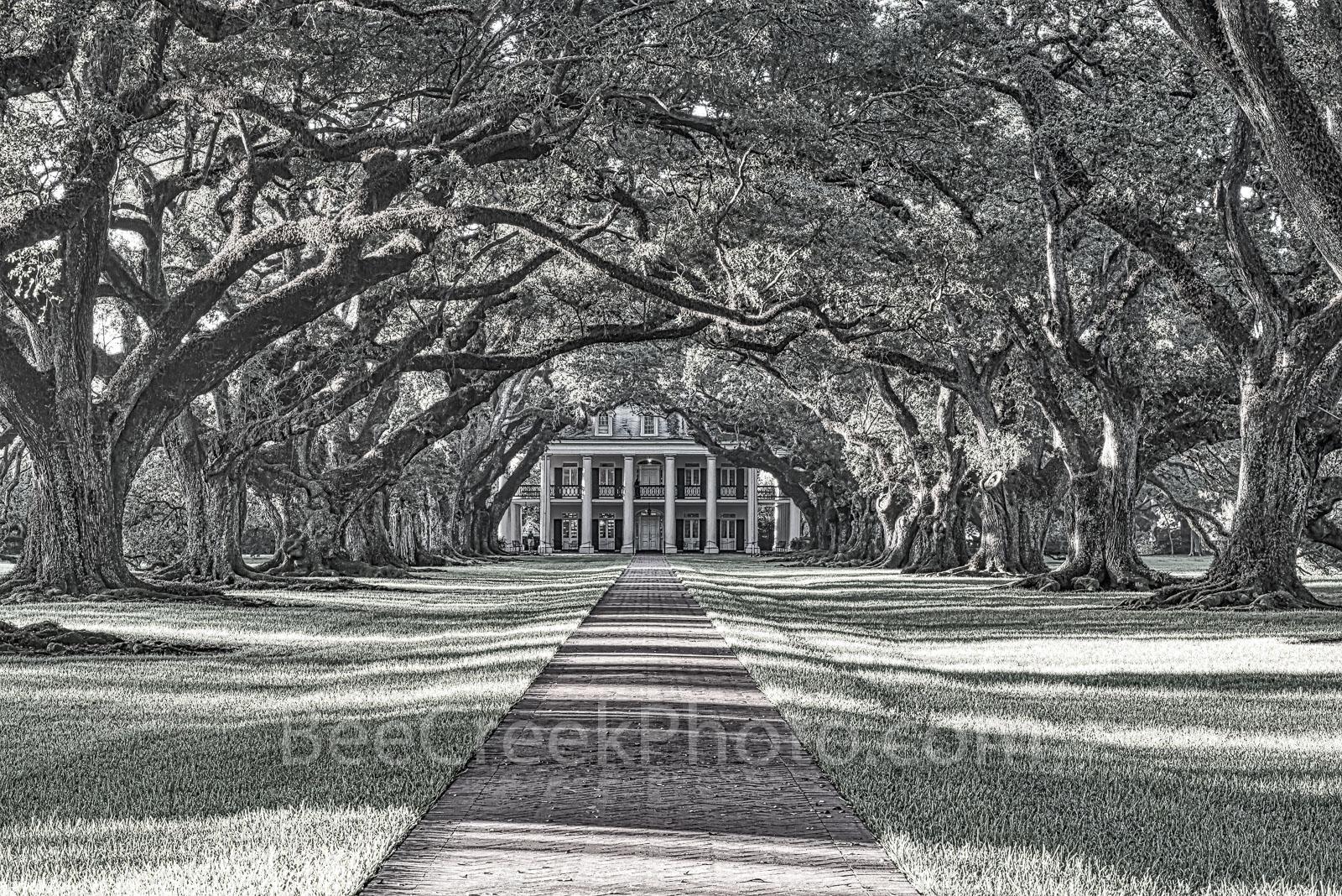 Oak Alley Plantation, mansion, black and white, bw, historic, landmark, southern, deep south. southern plantation, oak valley, seven oaks, slave, sugar cane, fields, tour, slavery, usa, , photo