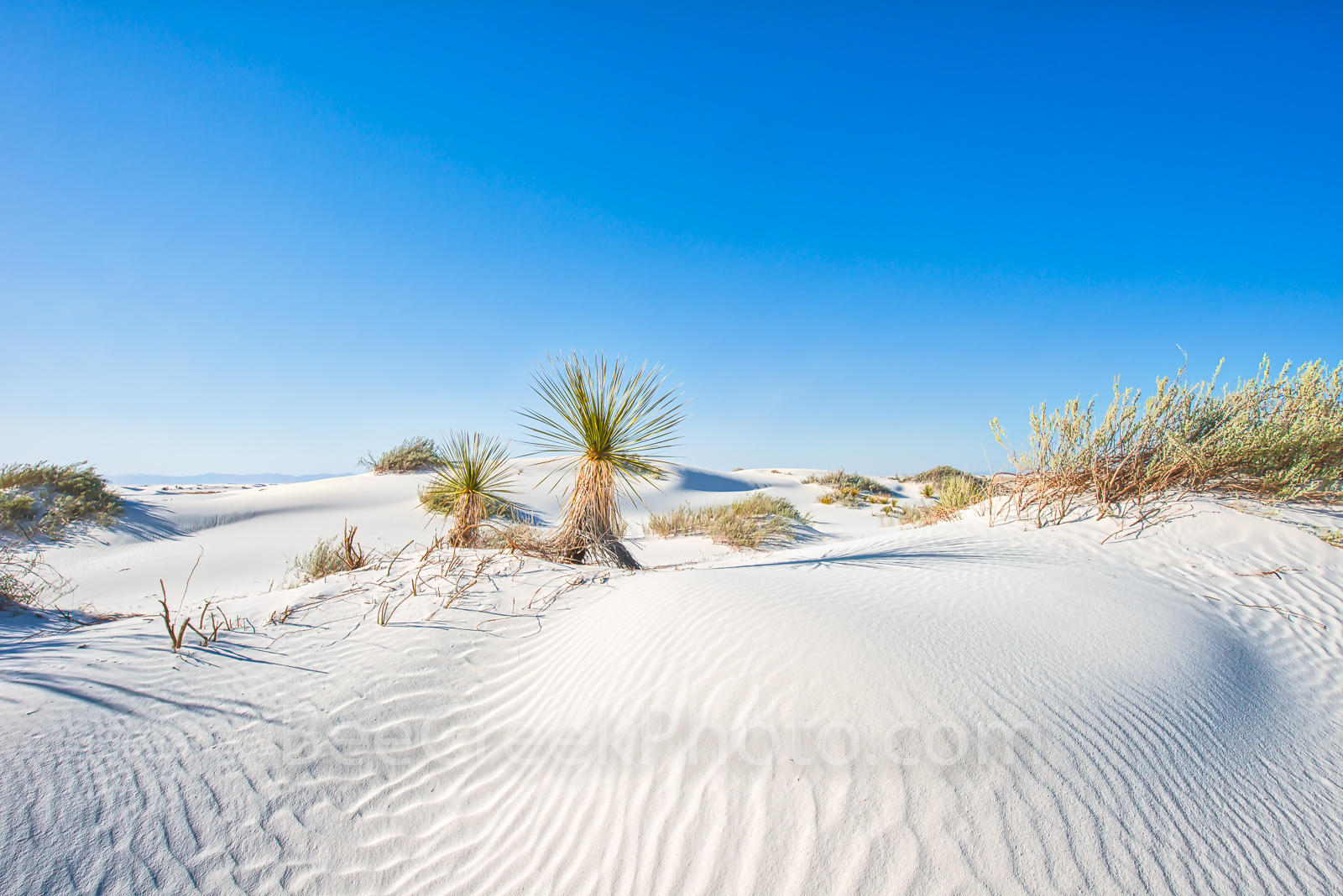 Desert Dunes - Desert Dunes Landscape from White Sands New Mexico with yuccas growing through the gypsum sand. &nbsp...