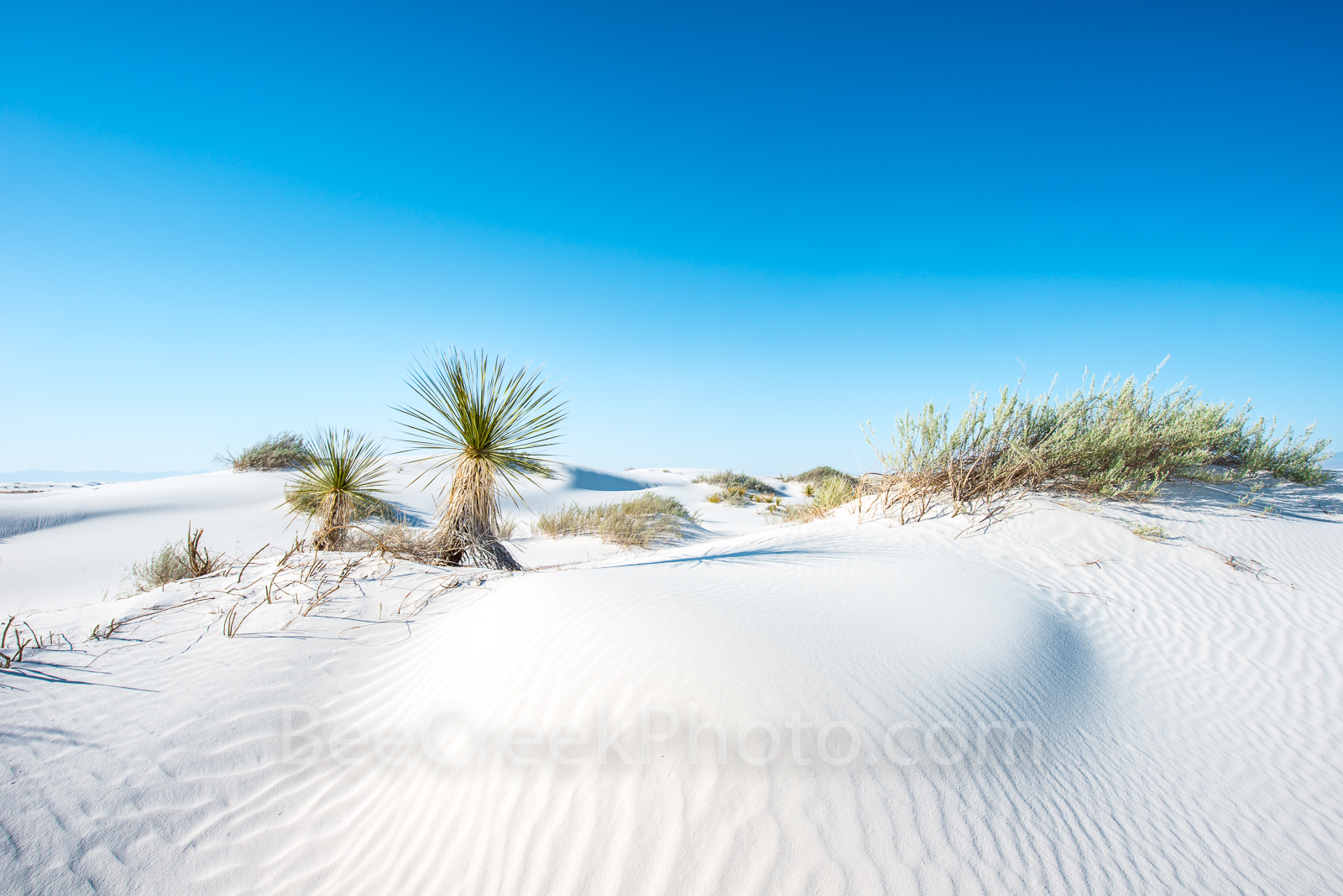 Desert Dunes2 -Desert Dunes Landscape from White Sands New Mexico with yuccas growing through the gypsum sand. The...