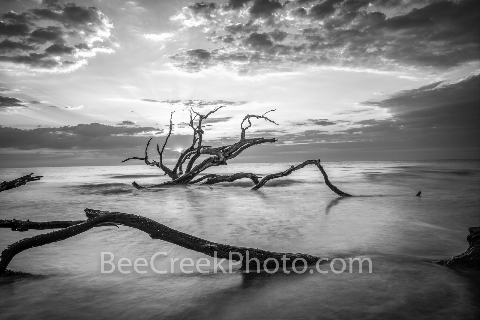 jekyll island, driftwood beach, driftwood beach jekyll island, jekyll island ga, boneyard beach, black and white, b w, sunrise, alantic ocean, deadwood, east coast, reflections, reflecting, clouds,  s, photo