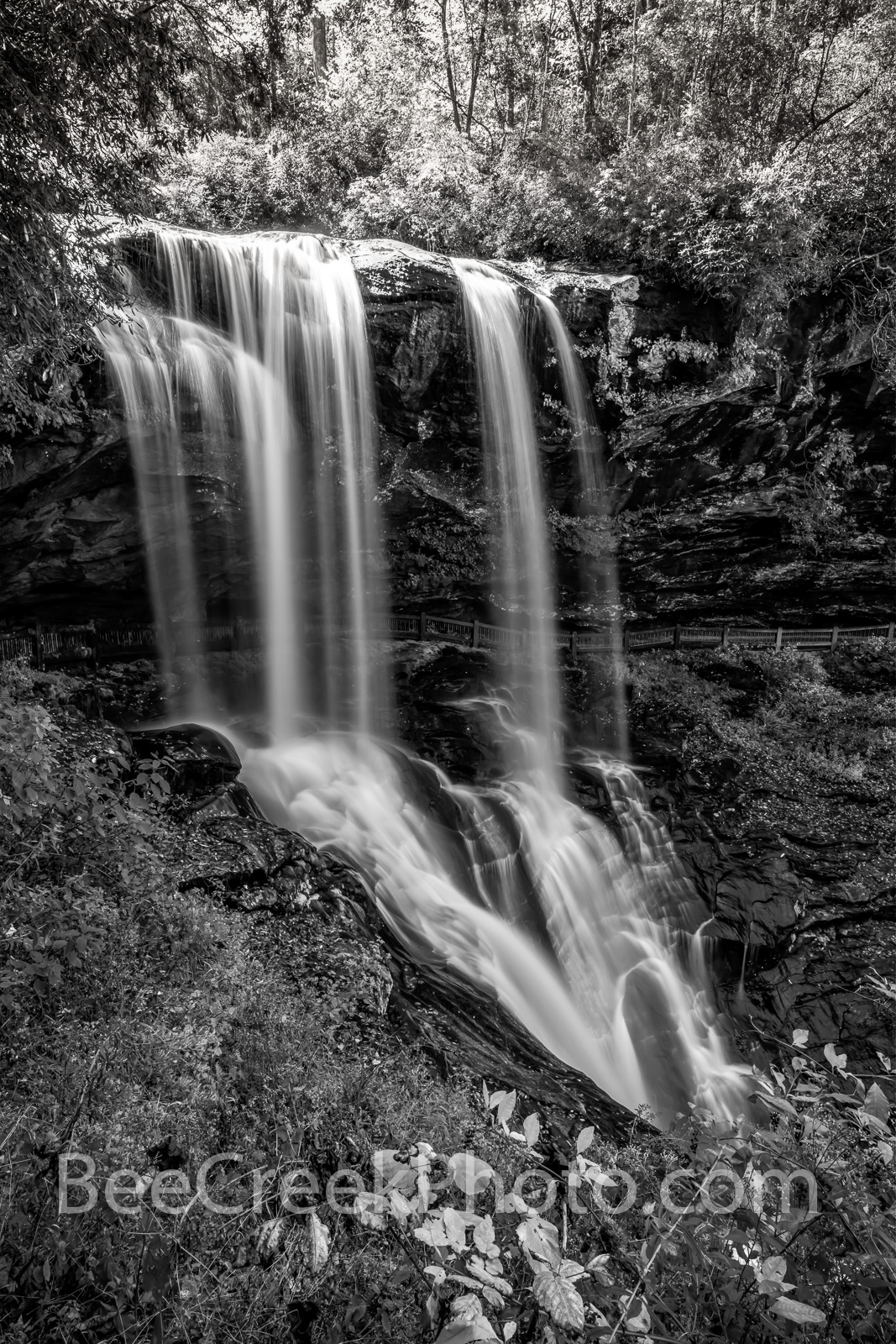 Dry Falls Smokies Vertical B W- The waterfall called dry fall in the the Smoky Mountain had some water flowing and it look so...