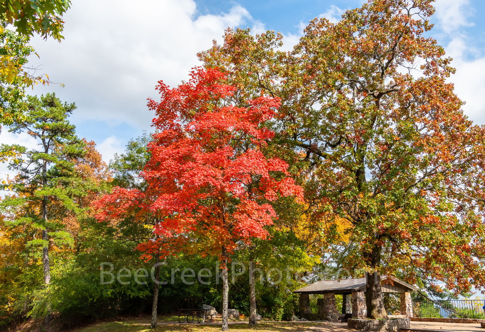 Hot Springs, color, fall, trees, hillside, autumn, maple tree, fall maples, overlook, arkansas, National Park,, photo