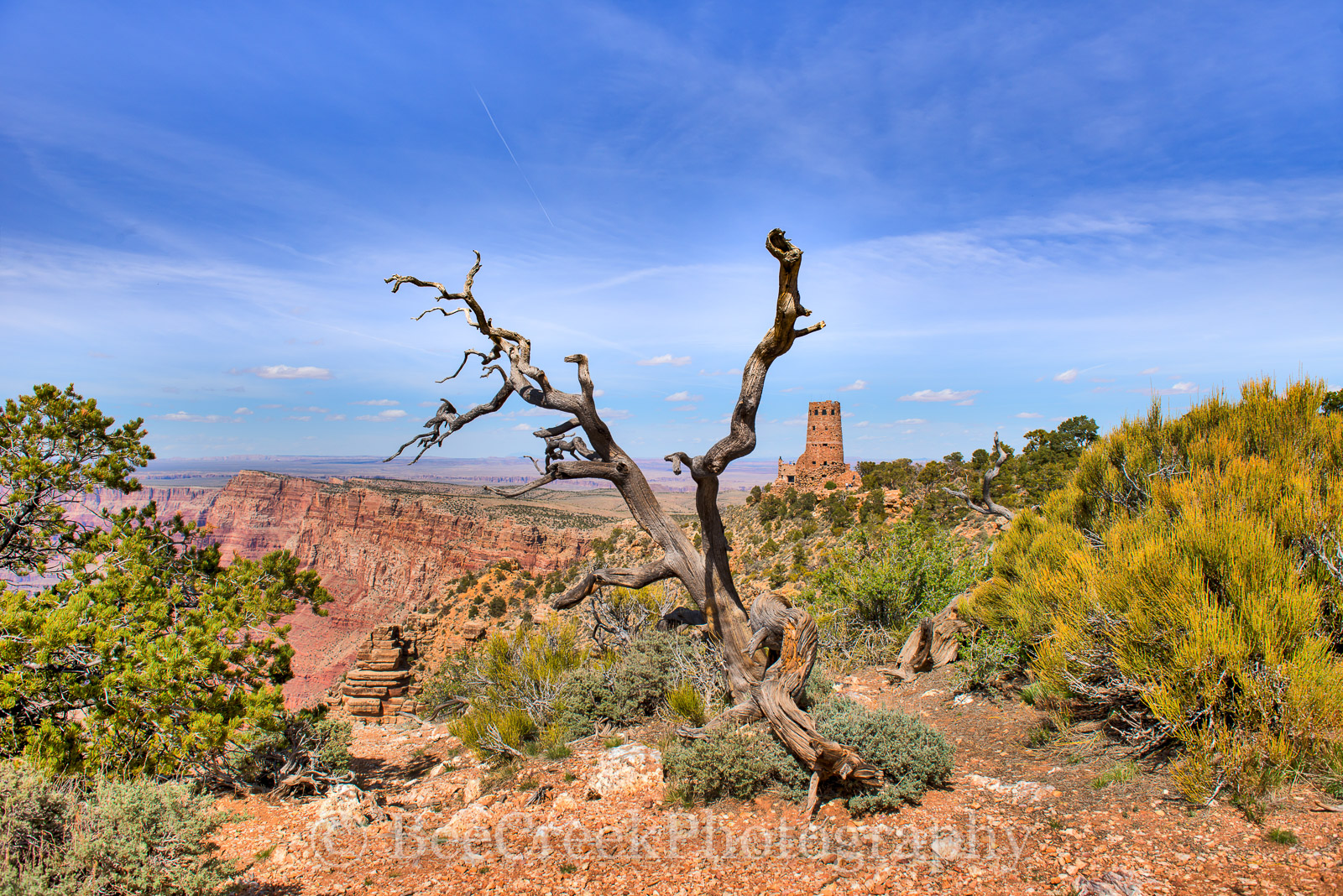 Grand Canyon, Grand Canyons, colors, geologic, geology, red rocks, sandstone, time, tree, watchtower, photo