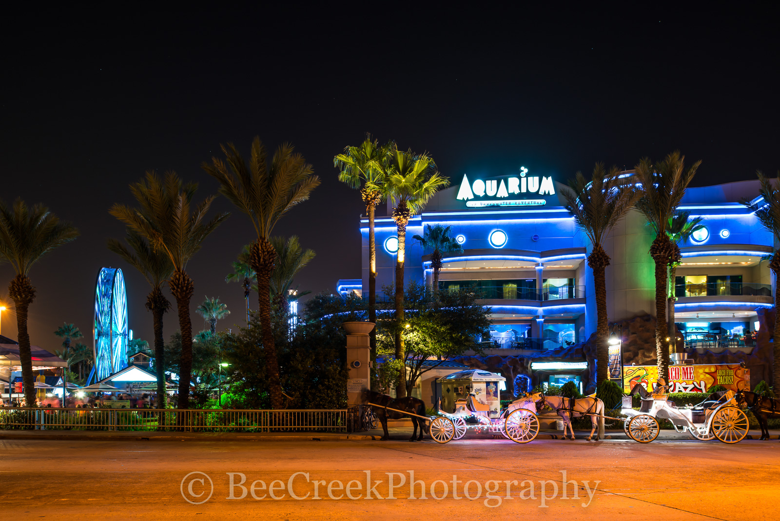 Aquarium, Houston, alligators, aqua blue, birds, carriages, cityscape, dancing, events, festive blue lights, fish, horse and buggies, mamals, reptiles, themes, tigers, tourist, photo